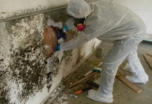 Remove the Mold in your Hom