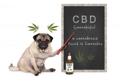 CBD Oil For Dogs: Can It Affect Their Behavior?