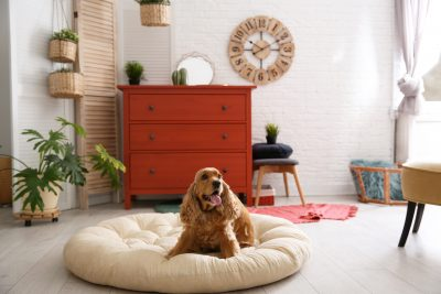How To Create A Cozy Space For Your Pet Inside Your Home