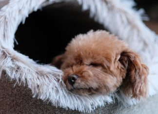 Cozy Space For Your Pet Inside Your Home
