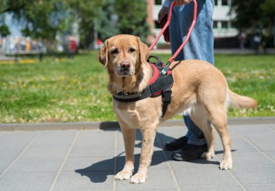 How to Make Your Dog a Service Dog (The Right Way!)