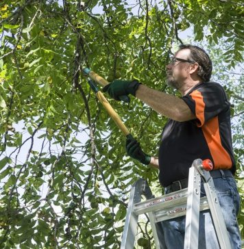how much does tree trimming cost