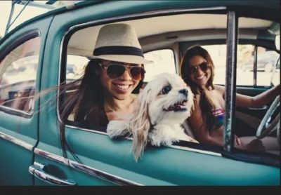 6 Tips for a Dog-Friendly Road Trip