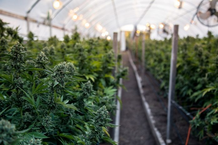 weed grower's tips