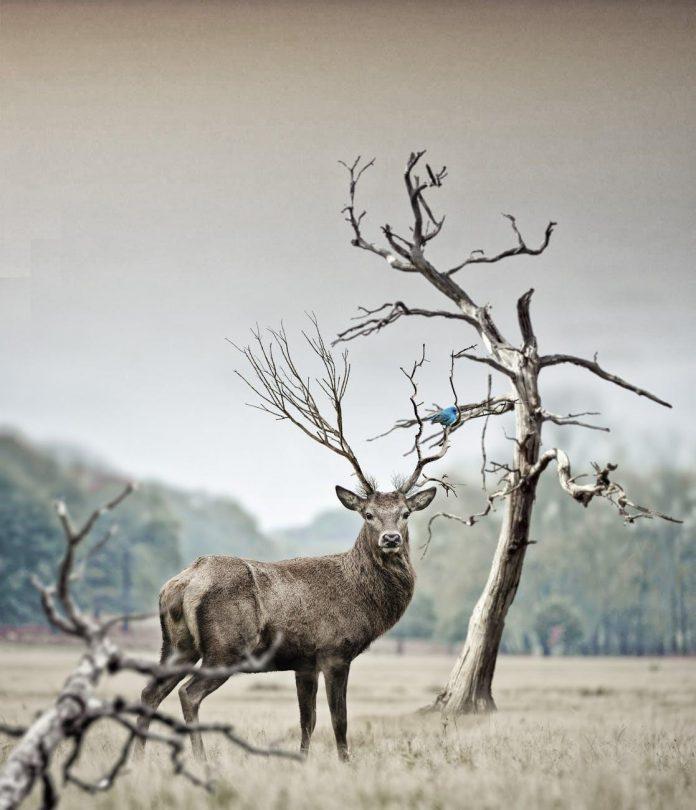 Mule Deer Hunting Mistakes