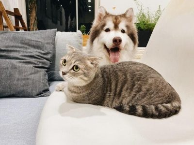 CBD oil for pets with Inflammatory Bowel Disease