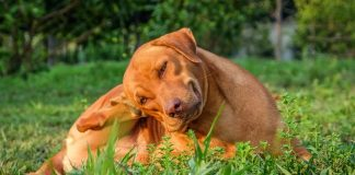 Flea Treatment For Dogs Work