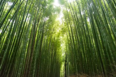 Why Bamboo Makes for Better Performance Attire