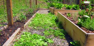 Practical Tips For Weed Control