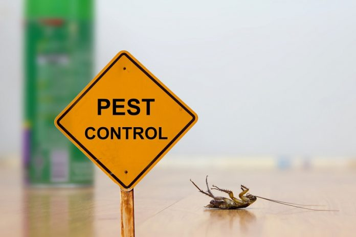 pro pest control