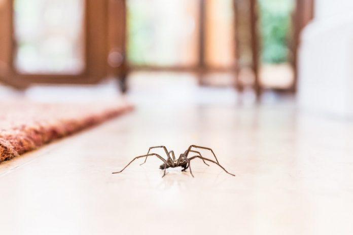 Spider-Proof