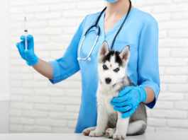 About Getting Your Puppy Vaccinated