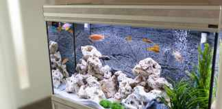 Clean a Fish Tank in 3 Simple Steps