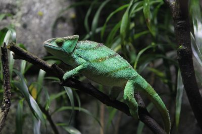 How you can prepare before bringing pet reptiles home