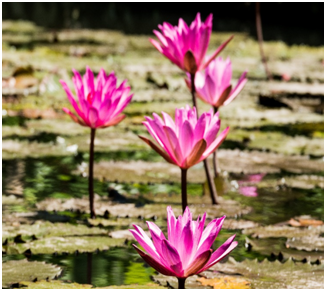 Adding Plants to Your Pond