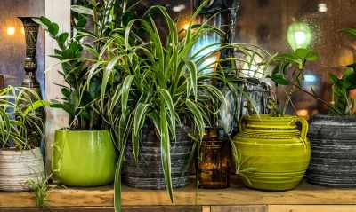 Indoor House Plants: The 5 Best Types for an Apartment