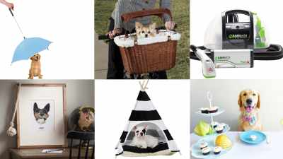 products for your dog