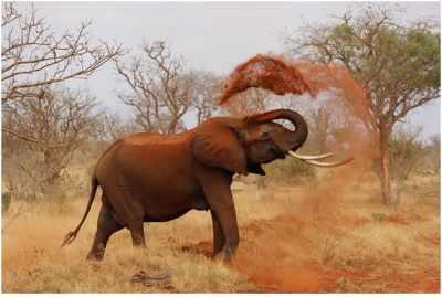 A Perfect day at Kruger National Park SA