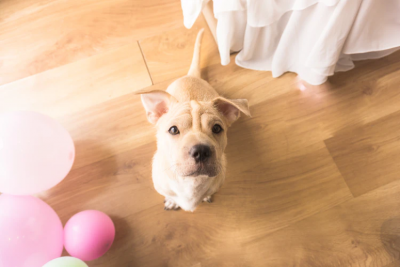 Health Issues in Dogs You Should Look Out For