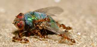 Termites to Protect