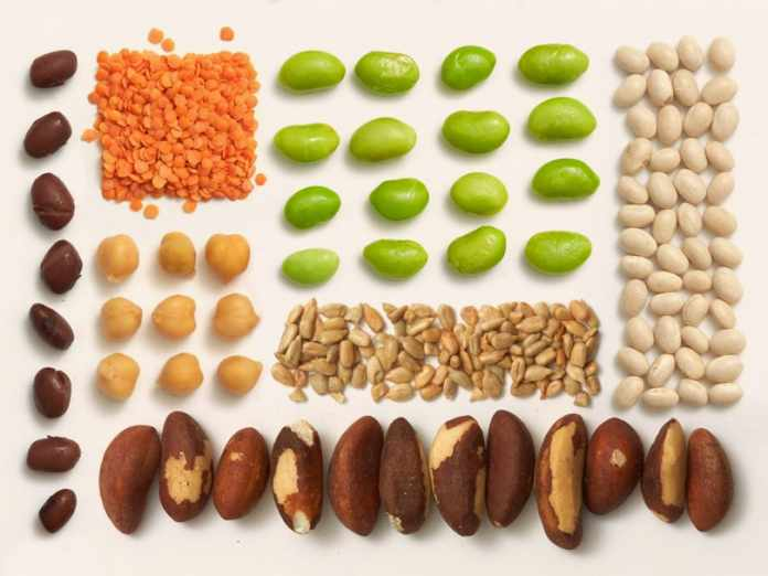 Plant Based Protein Meal delivery