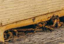 Pest Control Tips To Prevent Infestations
