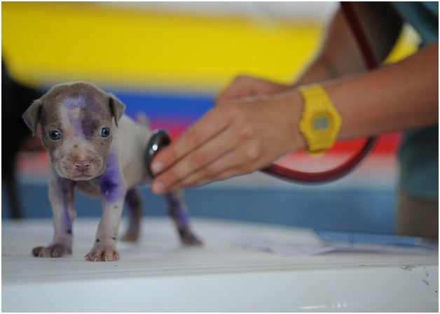 7 Reasons Vaccinate Puppy
