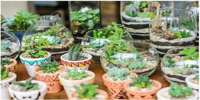 How care Succulents home