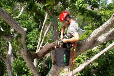 What Arborist Trees