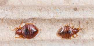 how to know if you have bed bugs