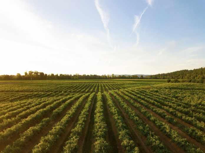 6 Common Farming Mistakes