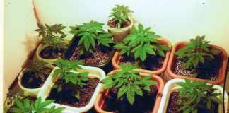Marijuana in Florida