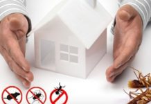 Invest in Home Pest Control Services