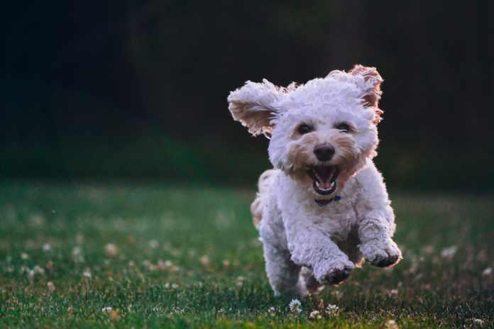wish birthdays to dog lovers
